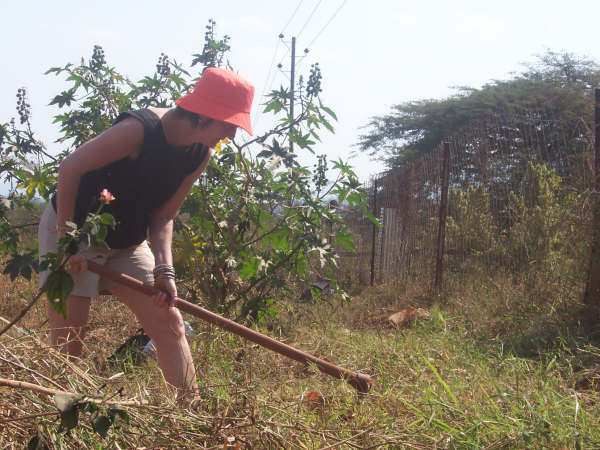 Clearing the land given by the Chief to the Mashudu Projects in Tshakhuma